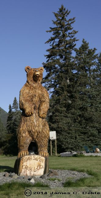 Bear in Wood at SILVER SALMON  36972476 O